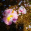 花びら落ちて花小道 足元咲いた春の足跡