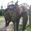 ネパール旅行記4-4 象に乗りながらジャングル体験 危険エリアにも!?
