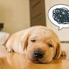 不眠症を自己チェック!病気が原因なら直ぐに病院へ。