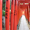 「不寝」はツツジ満開! 130年前は遊女たちが満開だった:御朱印:根津神社
