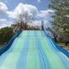 箱崎公園|福岡市東区 公園 日記