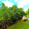 マングローブカヌー・西表島旅行