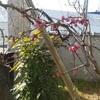 🌱春の訪れ
