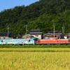 第989列車 「 鬼太郎列車、故郷へ帰る 2019・秋 但馬遠征 前編 」
