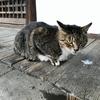 お寺に住み着いてる猫に癒された週末