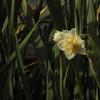 植物散歩~春の訪れ~