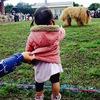 石垣島旅行 黒島大雨牛まつり!雨に祟られてます!(5日目)