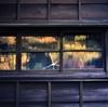 フィルム写真録 『 窓 』