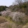 春の花2015
