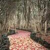 詩 「笠山椿群生林にて」