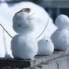親子で夢中で雪だるま作り!