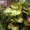 観葉植物もいろいろ入荷です♪