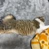 猫の換毛期対策:お勧めアイテム3種ご紹介