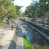 今日の1枚 ~夙川公園の桜~