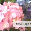 【栃木市】大平山のあじさい坂に行ってきました。とちぎあじさいまつり2018