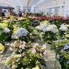 5月1日(金)いつの間に今日は「夏も近づく八十八夜」、コロナ感染者の13の症状に注意、暖かくなると芽が伸び花を付ける。