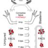 再生に伴う遺伝子発現のダイナミックな変動