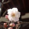 くーは今日も元気です&京の冬の旅「あじわい」コース前編「打田漬物」と「湯葉弥」♪