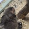 千葉市動物公園で飼育動物を(ほぼ)全種類撮影してきた