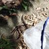 石小屋ダムでシマヘビに遭遇!