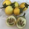 初買いタイ野菜と季節のフルーツ