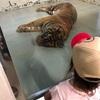 「横浜市立野毛山動物園」無料なのにとても充実した動物園
