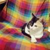 【47日目】1.2kg。お盆なので暇。猫生活に密着してみる。