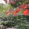 Memorial photo(Filmに写る秋の色)