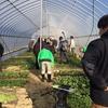 冬の野菜栽培見学会、大盛況でした♪