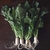 節約と癒しを兼ねた大根菜を使うメニュー2種
