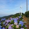 徳島、大川原高原のあじさいと風車