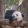 上野を楽しむ! アメ横・上野公園・上野動物園