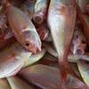 青魚を食べれば筋肉痛が軽減するかも