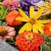 期間限定、秋の花手水(はなちょうず)が情緒的な、福島県郡山市「豊景神社(とよかげじんじゃ)」を参拝してきた!