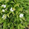 「正業」のお話①~初夏の草花、自然の恵みに感謝~「法の水茎」59