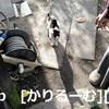 2018/12/09 猫ハナ(はな)写真 KIMG0244