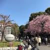 東京・上野公園 桜まつり  競争率低め?狙い目のお花見コース!