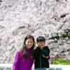 日本旅行2017年4月⑧✈僕の実家も桜が満開でした🌸