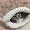 保護猫のムーアさんがやってきた経緯②