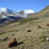 牛の採食行動:ウシは1日にどれくらい食べることに費やすのか