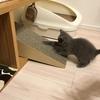 猫ヒストリー