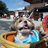 お祭りくーちゃん!犬連れOKの東京都千代田区・神田明神へお参り♪