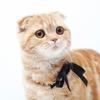 ストロングホールド(猫用フィラリア予防/2.6~7.5kgレボリューションEU版) の最安値を調べてみた