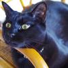 今日の黒猫モモ&白黒猫ナナの動画ー927
