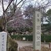 京都 桜シリーズ 桜の円山公園