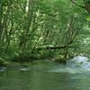 【青森旅行】涼を求めて奥入瀬渓流へ
