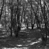 武蔵野を ASAHI PENTAX で撮る