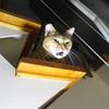 10月後半の #ねこ #cat #猫 どらやきちゃんA