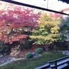【相国寺】鳴き龍に白い象!方丈庭園の紅葉絶景や若冲まで見所解説