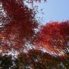 田川邸の紅葉